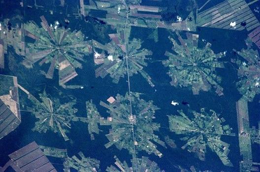 entreprise déforestation