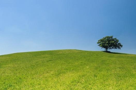 écologie vert
