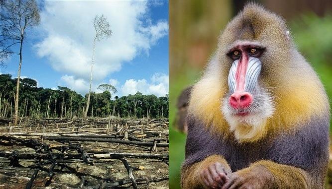 huile de palme boycott écolo